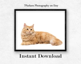 Cat Print; Printable Wall Art Nursery; Gift for Cat Lover; Animal Wall Art; Kid's Room Decor; Printable Cat Art; Instant Download;Orange Cat