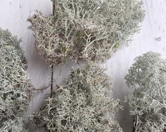 Lichen, dried lichen, moss, natural material, home decor, raw material, forest goods