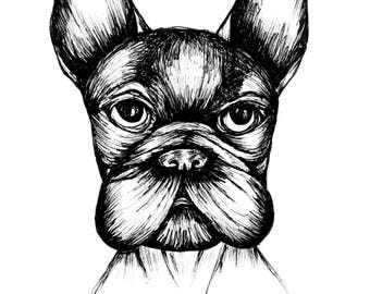 Resting Frenchie Face download