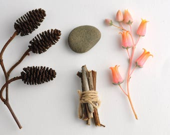 Macro Flatlay Peach Succulent stone twigs twine pine cone - Digital Photography Wall Art