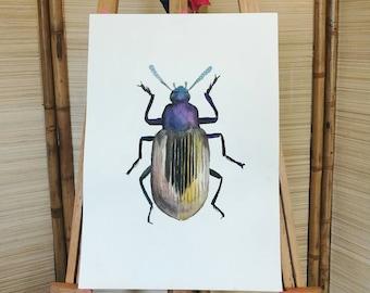 Golden Beetle Original Watercolor Painting 37.5CM*52.6CM