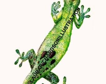 Gecko, Borneo Wildlife, A4 giclee Print, Hand drawn, Illustration