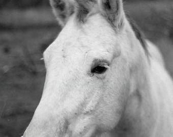 Cheval Photograph