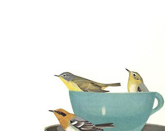 Warbler wake up call. Original collage by Vivienne Strauss.