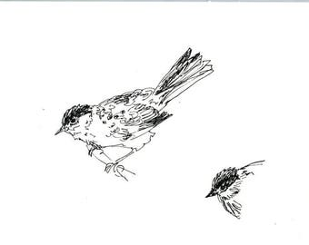 Sketchbook Sale - Bird #16 Original Ink Line Drawing - 8x10 Songbird Original Art