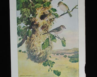 Vintage Bush-Tit Bird Print and Educational Leaflet, Audubon Society