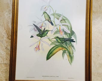 Vintage Hummingbird Lithograph J.Gould Professionally Framed