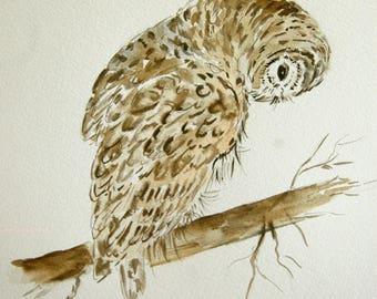 chouette rayée, oiseaux, nature, dessin, encre, art, art animalier,étude,  dessin original signé