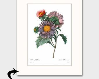Asters Art w/Mat (Flower Wall Artwork, 20th Anniverasry September Birthday Gift, Purple Home Decor) Matted Botanical Print