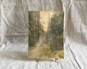Vintage Forest Path Photograph