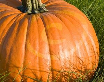 Pumpkin Photograph, Halloween Clipart, Clip Art, Halloween Photo, Digital Download, Header Image, Halloween Decoration, Pumpkin Photo