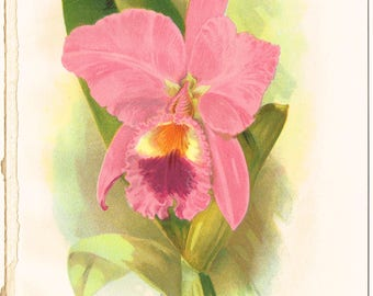 Antique vintage Victorian, 19th century 1800s , book plate, orchid flower botanical colour color print - pink green - lithograph
