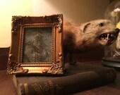 Framed Iguana Skin - Preserved Taxidermy Victorian Specimen Craft