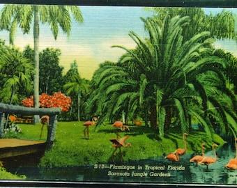 Vintage Linen Flamingos Sarasota Florida 1950 Unused