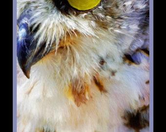 """Great Horned Owl 16x30"""" print on canvas: owl painting on canvas, horned owl, owl art, owl print, birding art, falconry, owl lover, bird art"""