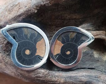 fossil ammonite earrings