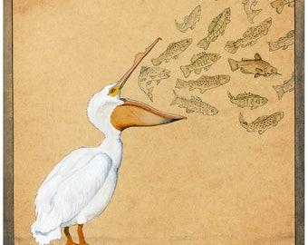 White Pelican and Fish - 8x10+ - Watercolor Illustration