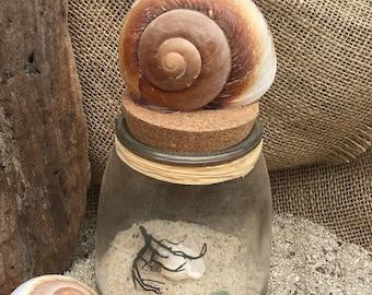 Sea Shell Jar