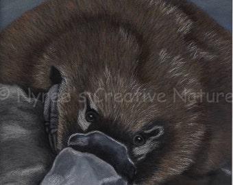 Limited Edition Platypus Print/ Original Australian Wildlife Art