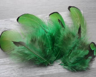 Set of 10 natural Golden pheasant feathers dyed Green