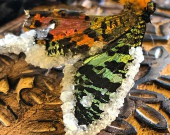 Crystallized Sunset Moth