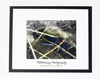 Swamp Dragon Fly Photograph, Wall Art, Home Decor - Contemporary - Macro, Swamp, Insects, Bugs, Photography, Gift, Modern Wall Hanging