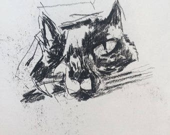 Charcoal sketch example kitty