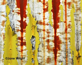 "Mounted Fine art Photograph by Jane Wright ""Paint"""
