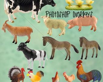 Celebrity animal photoshop overlays