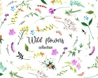 Wild flowers collection/Set of Watercolor Floral Elements.