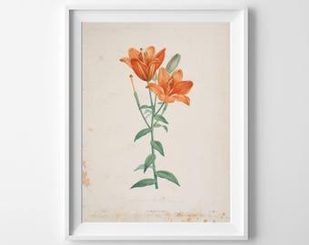 Flower Art Print, Flower Wall Decor, Flower, Flower Oil Painting, Flower Watercolor, Flower Nursery, Flower Wall Art, Flower Painting, 308