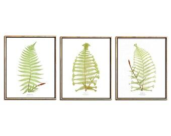 Botanical Illustration, Botanical Print Set, Fern Print, 3 Piece Wall Art Set, Triptych  Wall Art, Printable Art, Vintage, Antique, Prints