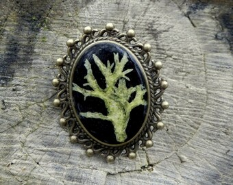 Resin Moss Lichen Brooch, Woodland Broosh, Real Plant Jewelry, Terrarium Jewelry, Resin Botanical Brooch, Nature lovers gift, Broosh for mom