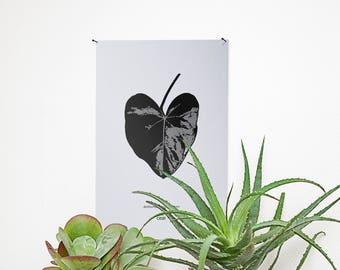 Poster - Anthurium andraeanum