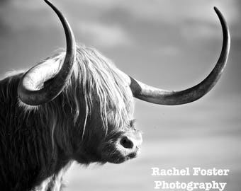 Handsome Horns - Photographic Print