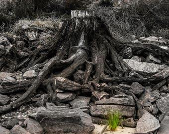 Tree Stump A4 Size