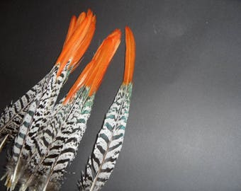 long 23 33cms, superb quality, pheasant tail feather, Tiger and red/gold