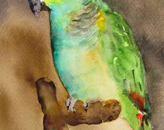 Watercolor of an Amazon Parrot blue fronted - Amazon Parrot - animal Art - pet Portrait in watercolor