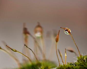 Macro Photography, Nature Art Print, Dew drop Wall Art