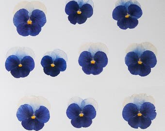 10 Dried Violas blue and white pansy Craft Supplies Wedding Decorations Real flowers Embelishments Pansy Viola Wedding Decor, Viola
