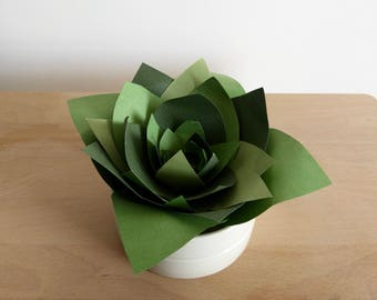 The Echeveria Vera - Oily - succulent - vegetable - Jungle Collection of paper - urban botanical/plant