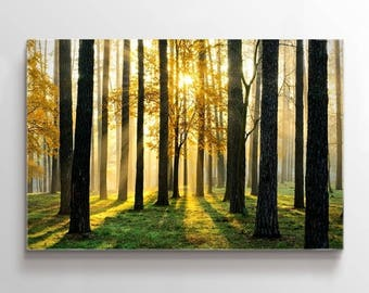 Large Wall Art Landscape Canvas Print - Tall Trees in Forest at Sunset