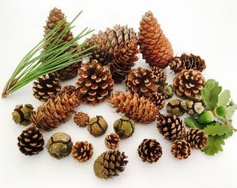 Autumn decoration, pinecones, assorted Pine Cone, pine cones, nature decoration, Halloween decoration