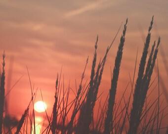 Tall Beach Grass Sunset, Lake Michigan Sunset, Beach Sunset, South Haven Photography, Lake Life Wall Art