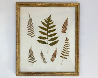Framed Pressed Leaves Picture