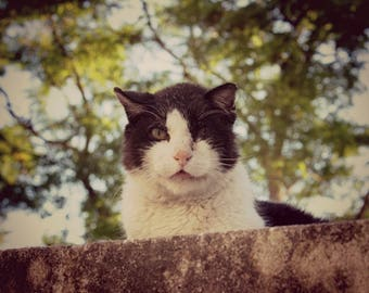 Elegant French Cat Photo Print