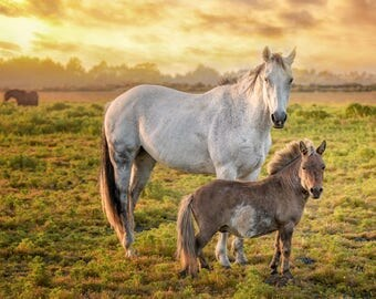 Horses and a Golden Sunset