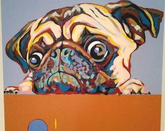 Pug, dog portrait