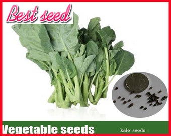 200pcs Chinese kale seeds green vegetable seeds