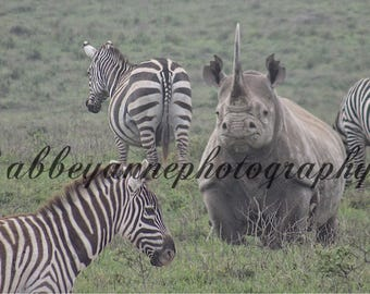 Black Rhino photo